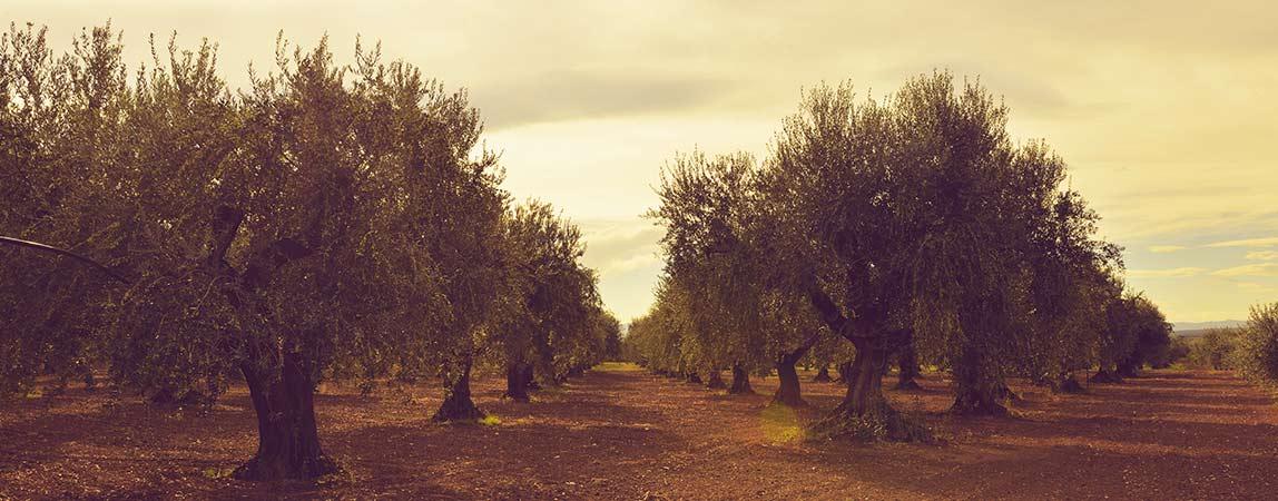 mio-padre-e-un-albero-radici-azienda-2-1148x450-3