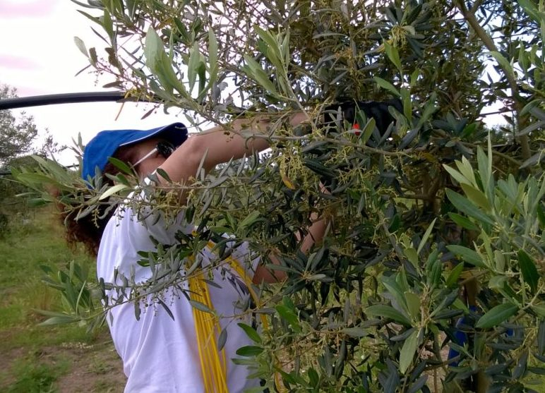 potatura-mio-padre-è-un-albero